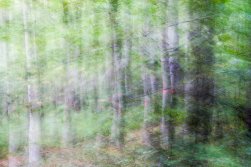 201309 - Bäume 6