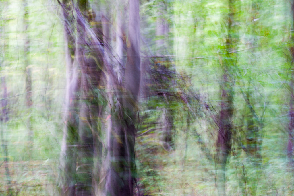 201309 - Bäume 7