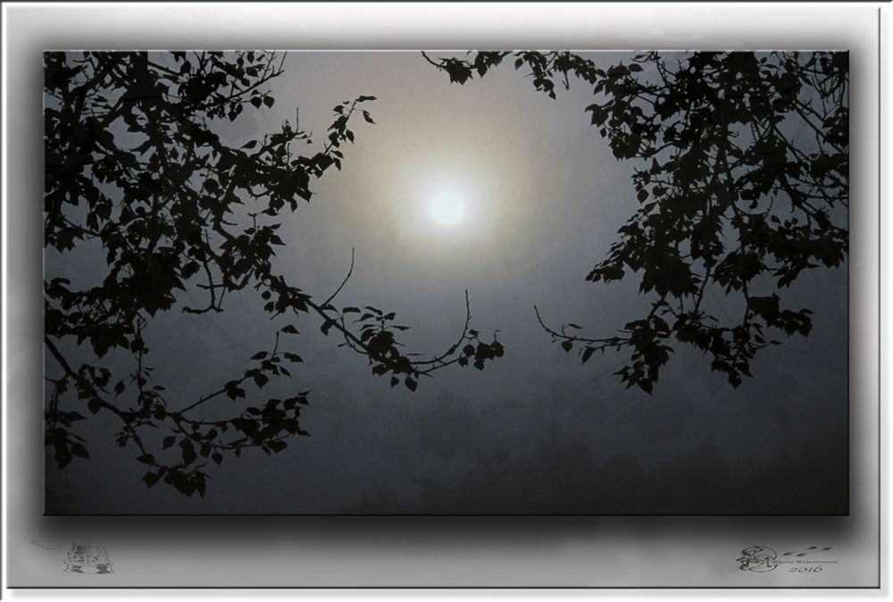 2016 01 03 - P 254 D - durch die Nebel