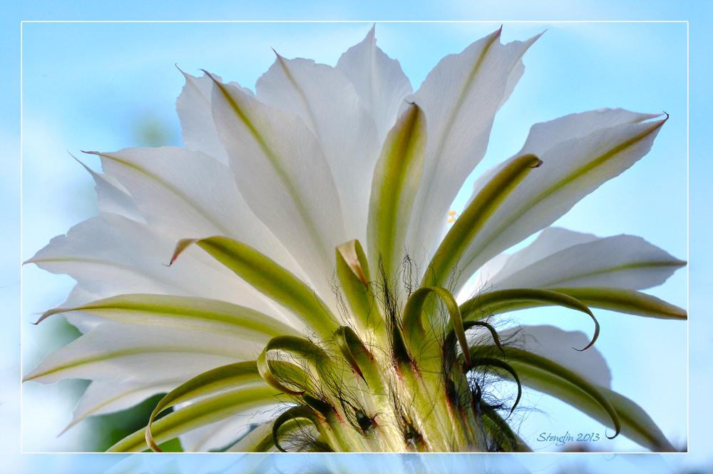 203-13 Die zweite Blüte