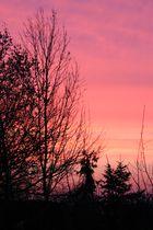 23.2.2011 Morgensonne über Niederkrüchten