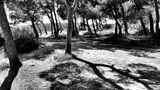 Les pins von JeanPierre