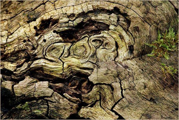 266 Jahre altes Holz schaut uns an!