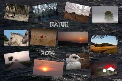 die Natur in 12 Monaten