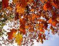 Herbstleuchten von Ingeborg Bröll