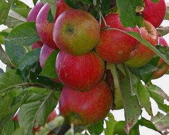 Erntezeit Obst und Beeren
