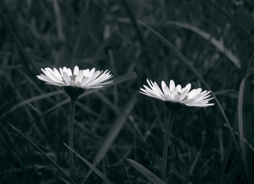 2blümchen