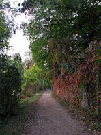3-4 Meter neben dem Rhein(links)