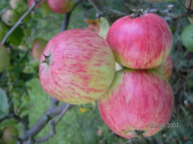 """""""3 Äpfel für Aschenbrödel"""""""