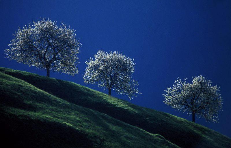 3 Bäume im Gegenlicht