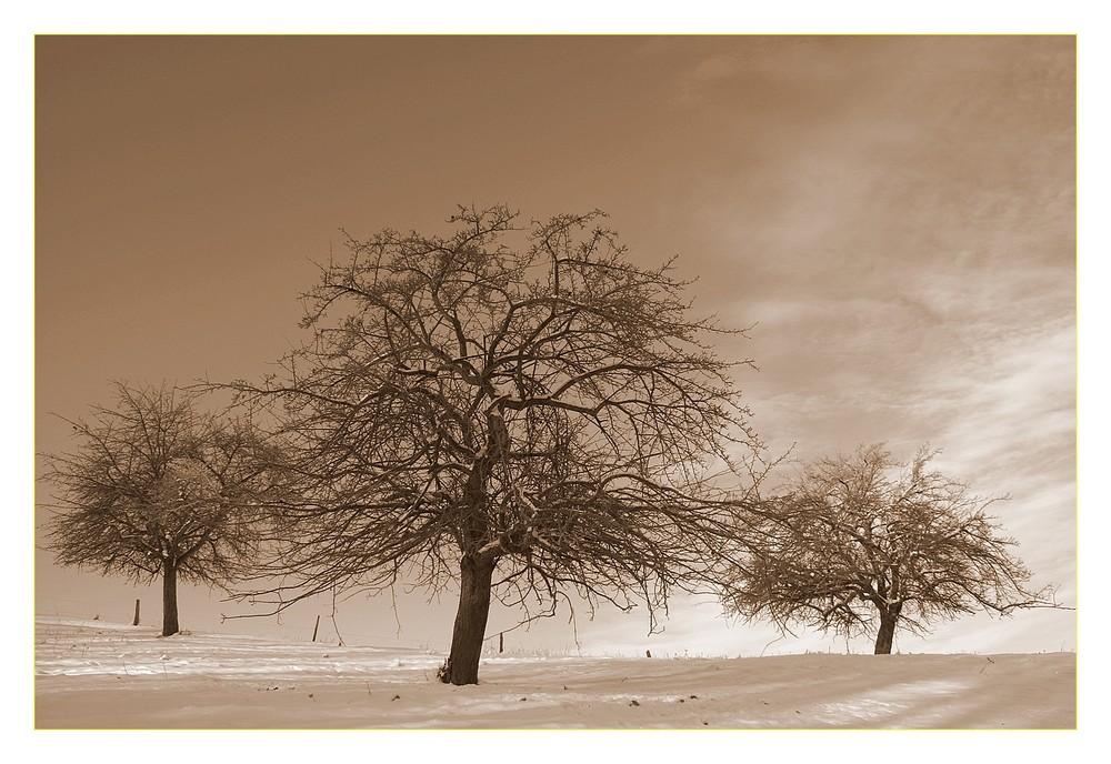 3 Bäume im Schnee