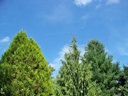 3 Bäume im Sommer