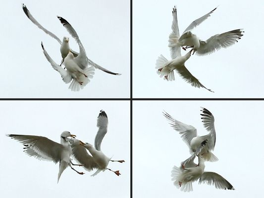 3 Bilder pro sekunde ...