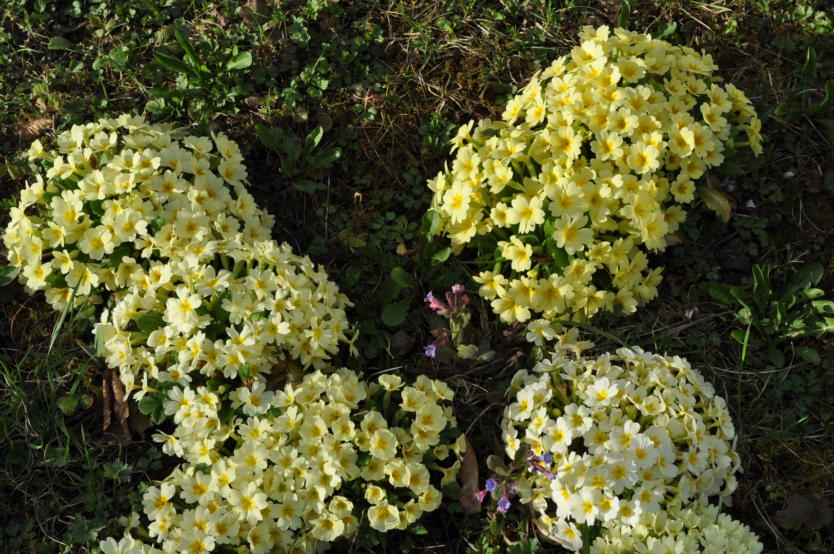 3. Blütenzeit - dafür in Massen