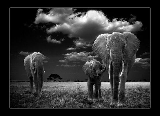 3 Elefanten