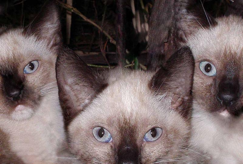3 gatos