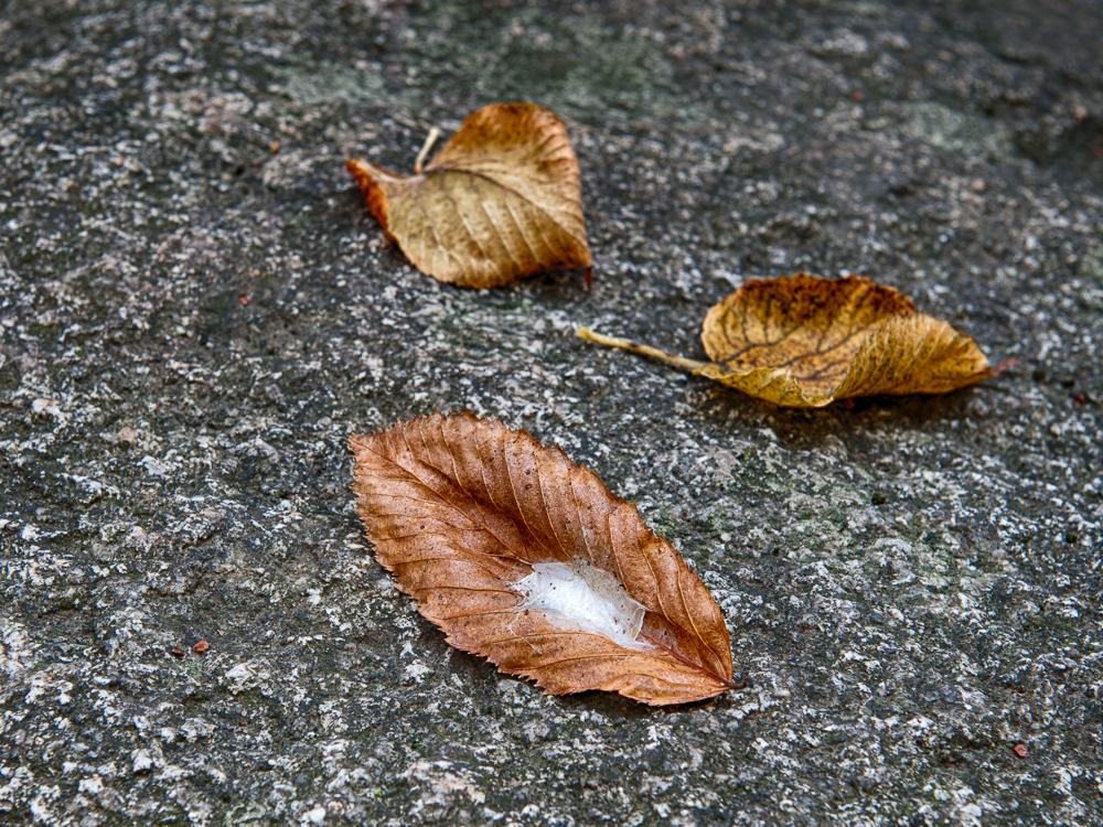 3 herbstliche Blätter