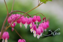 <3 Herzblumen