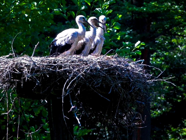 3 im Nest