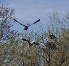 3 ist einer zu viel im Frühlings-Nest