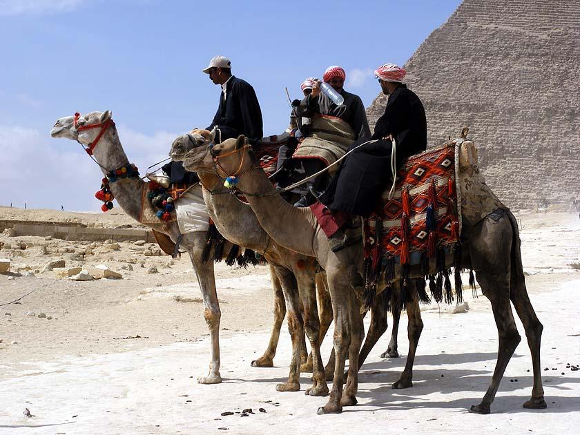 3 Kamele...