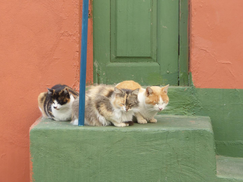 3 Katzen am Straßenrand