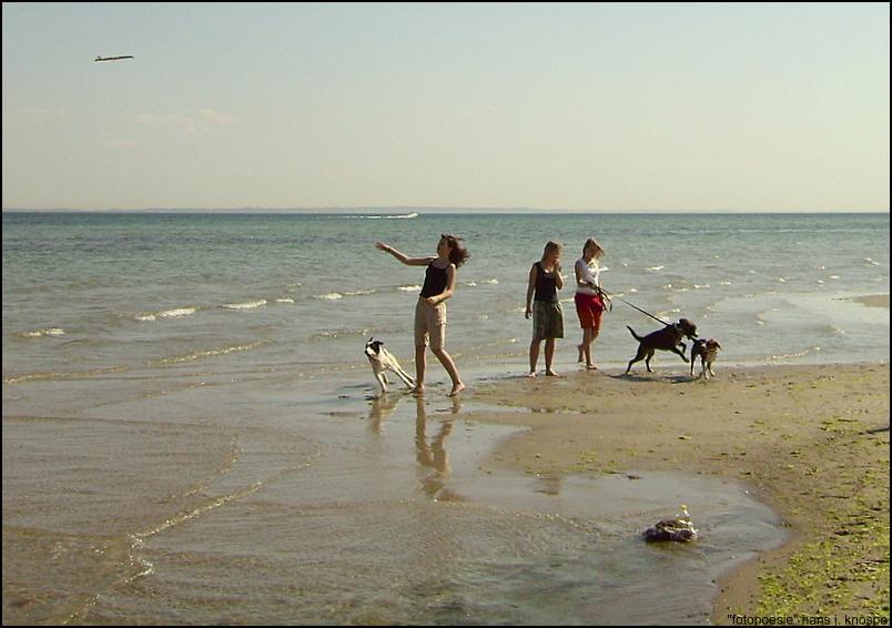 3 Mädchen mit 3 Hunden - und Spass am Strand - ganz ungestellt!