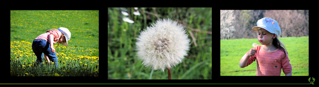 3-ptik Ma fleur de pissenlit