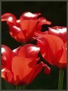 3 rote Blumen