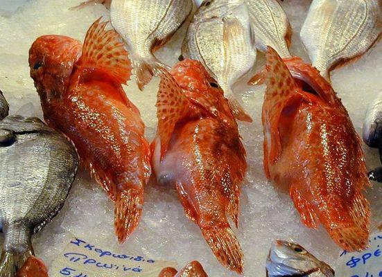 3 rote Fische