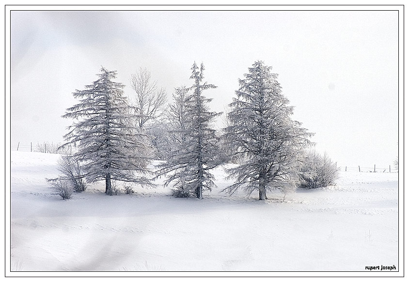 3 Schwestern im Winter.................