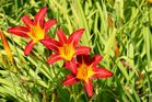 3 x 6 = 18 Blütenblätter