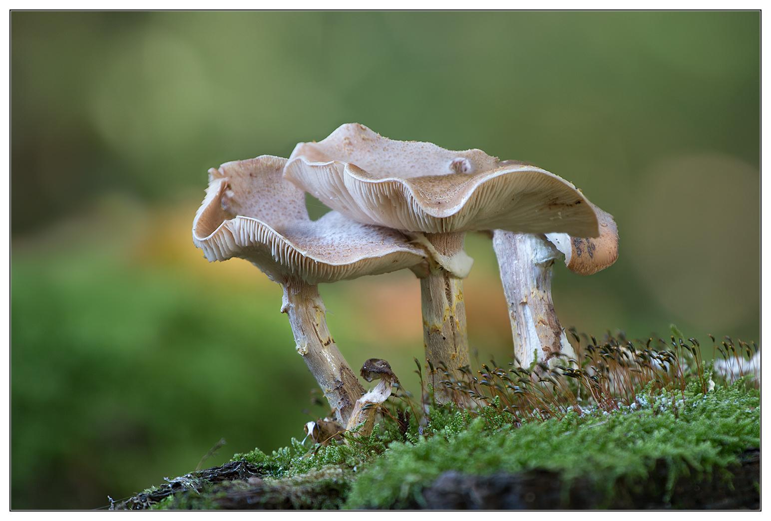 3,1 Pilze