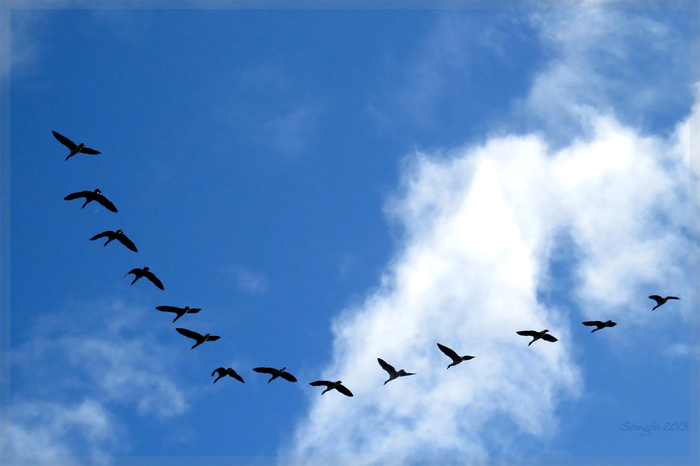 312-13 Sie fliegen wieder...