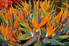 33-09 Madeira - Insel der Farben #2