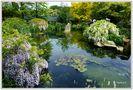 Mondoverde - Teichidylle im chinesischen Garten von Ingeborg K