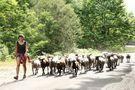 la bergèr et son troupeau ! de mickey40