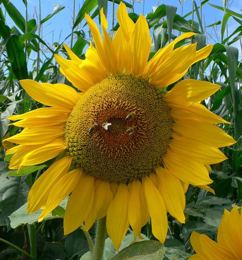 365 Tage soll die Sonne für Dich scheinen....