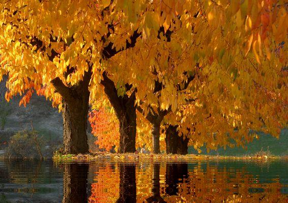 3720 automne