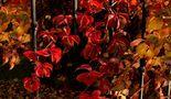 FR: Le Ultime foglie von Jean Exiga