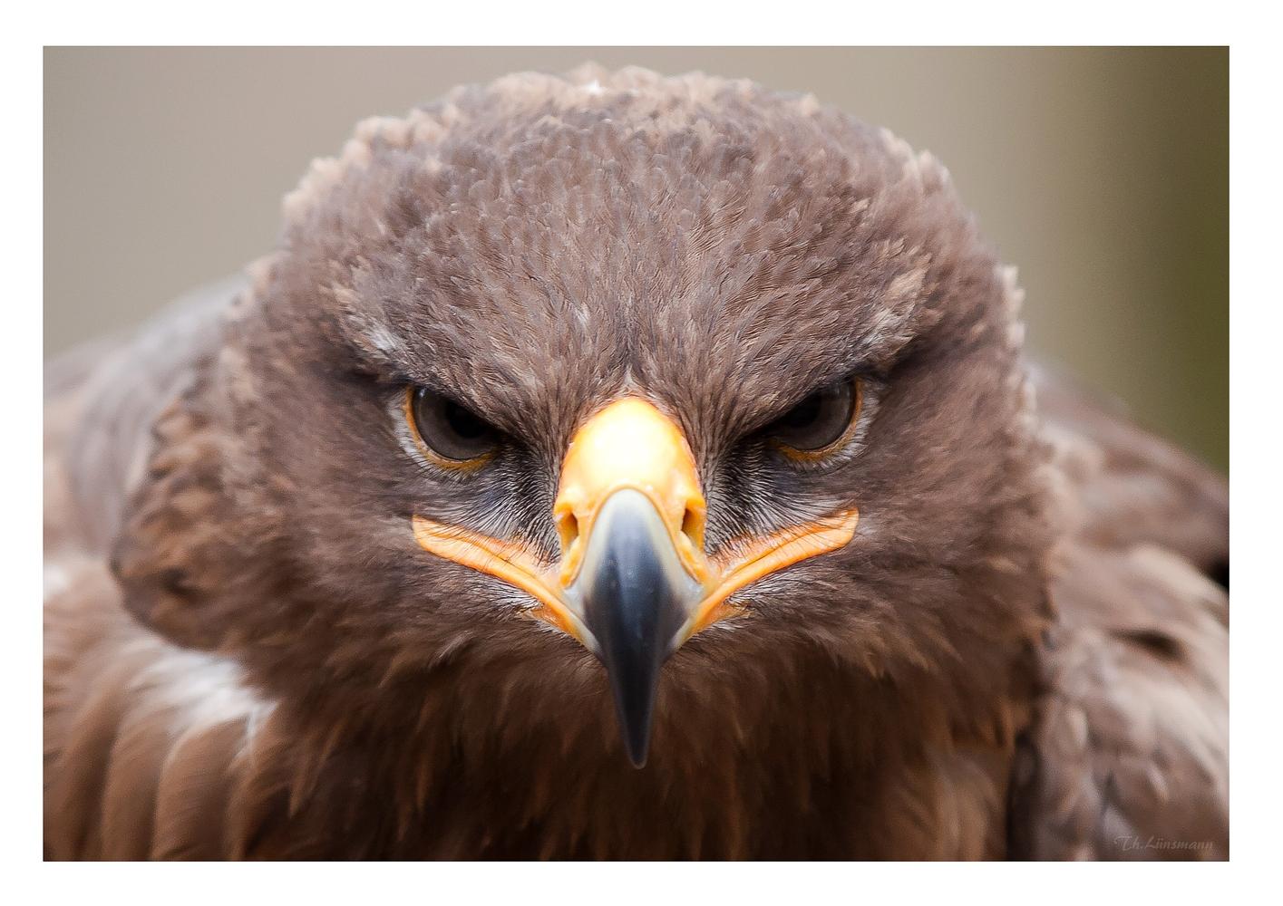 3D - Adler!