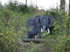 3d Elefant