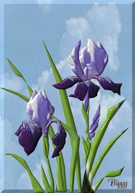 3D Iris