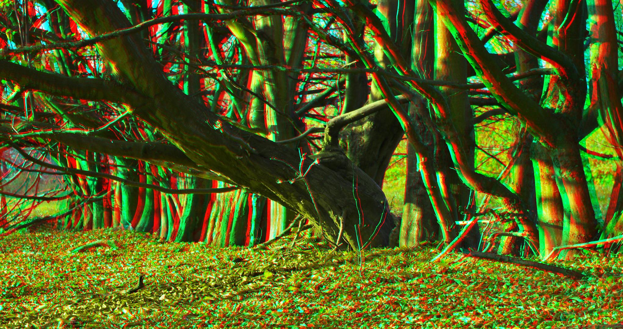 3D Niederwald