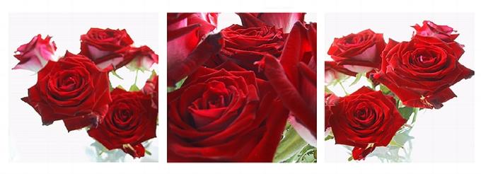 3er Serie Rosen