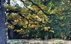 Herbst im Hain von SINA