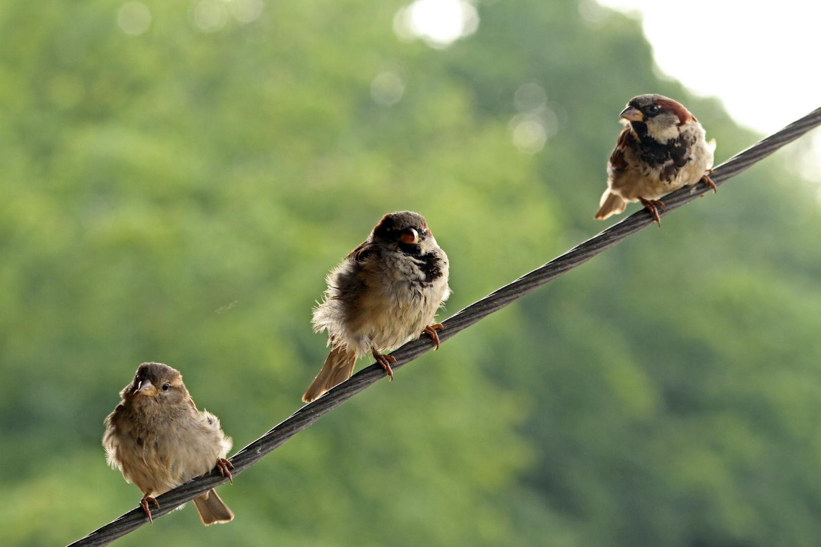 3Vögel