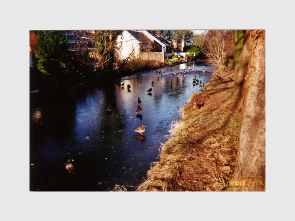 _4_ Erftstadt: Entenwanderung