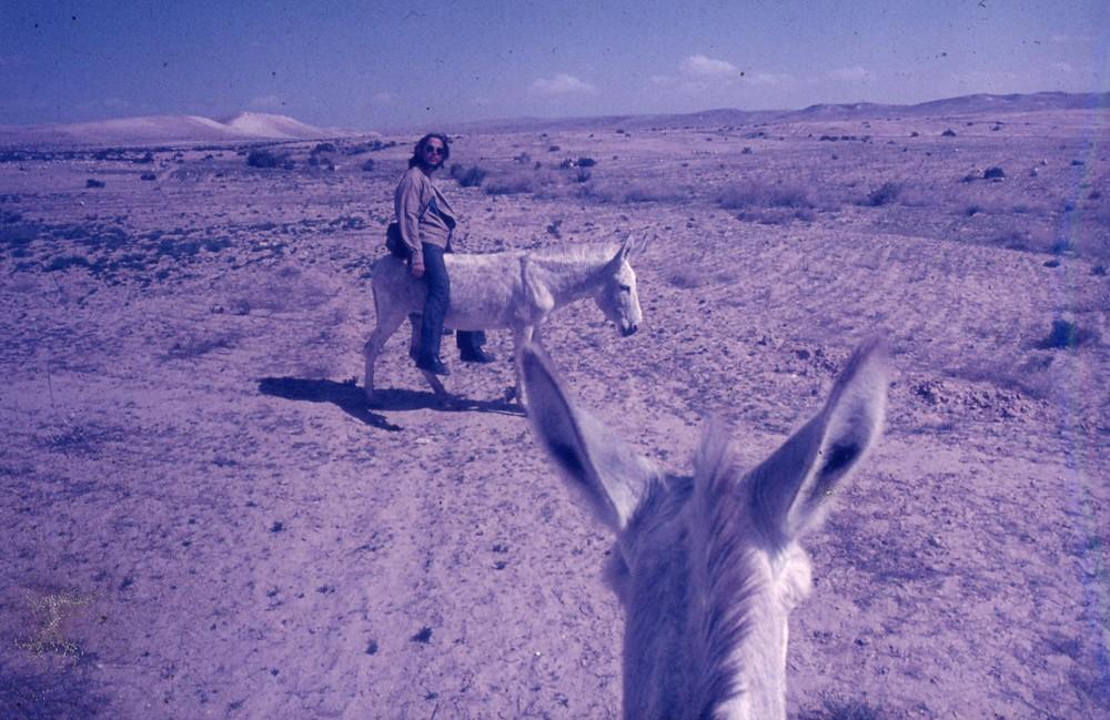 4 Esel im Negev
