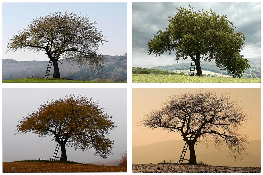 4jahreszeiten foto  bild  jahreszeiten ordner 1 natur